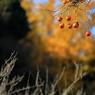 秋の味覚と秋の色