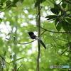 参考鳥01