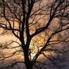 冬の夕陽5