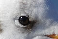 鵜の眼鷹の眼鴎の眼