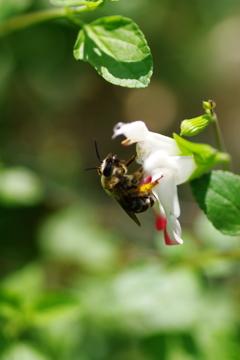 蜂の宅急便