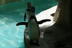 怖いペンギン