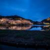 三渓園の夜桜3
