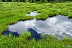 夏色の湿原