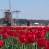 花と風車2