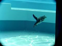 蒼きペンギン