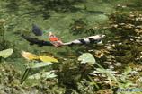 なもなき池 #7