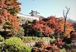八幡城の秋 #2