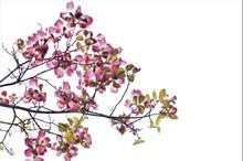 花の水が成る木