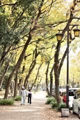 秋の散歩道 輝く時