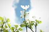 お空に咲く