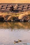 矢田川風景4