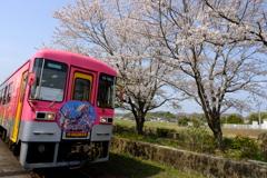 北条鉄道と桜