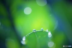 Drops♪