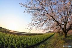 春の風景♪