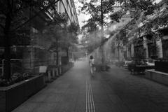 都会のオアシス