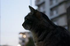 11月24日・朝のご近所猫①