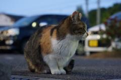 12月15日・朝のご近所猫①