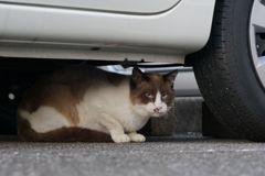 11月24日・朝のご近所猫④