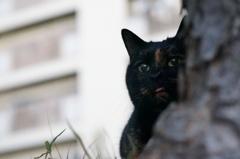 12月14日・朝のご近所猫②