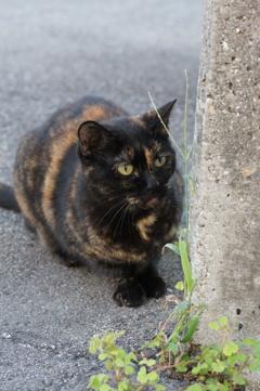 朝、逢った猫 9月19日