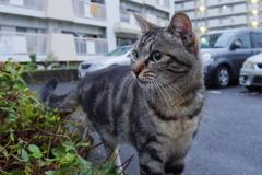 10月21日、朝のご近所猫 ①
