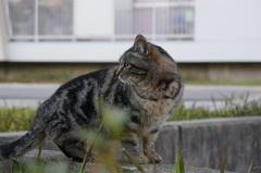 12月14日・朝のご近所猫④