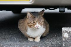 10月24日、朝のご近所猫 ①