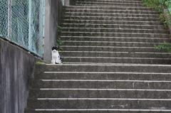 朝、逢った猫 9月22日 (2)
