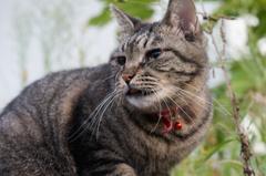 朝、逢った猫 9月22日 (1)