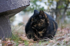 12月15日・朝のご近所猫②