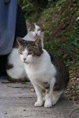 朝、逢った猫達 9月22日 (3)