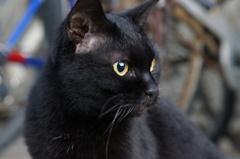 11月24日・朝のご近所猫②