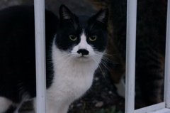 11月17日・朝のご近所猫①