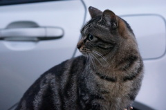 11月17日・朝のご近所猫②