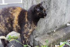 10月21日、朝のご近所猫 ③