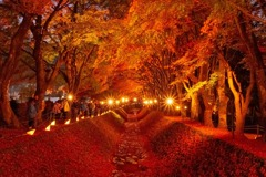 紅葉の回廊(1)