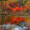 2016志賀高原の秋4