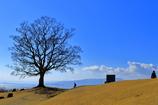 標高130メートルの木