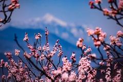 北国の春 ~高妻山~