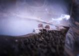地獄谷温泉 ♨︎ ~お猿の温泉~
