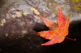 散りゆく秋を・・・
