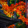 君と見た鮮やかな秋♬*.+゜
