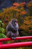 寒そうな野猿さん