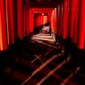 Shadow Of 1000 Torii's Gates