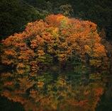 湖面に秋色