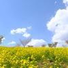 菜の花の丘と青空
