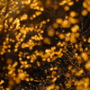 金色のイルミネーション