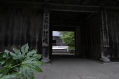 夏の雲巌寺2