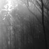 朝の光差す森